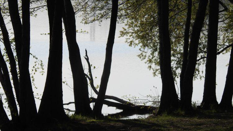 Niewiesze, Jezioro Pławniowickie