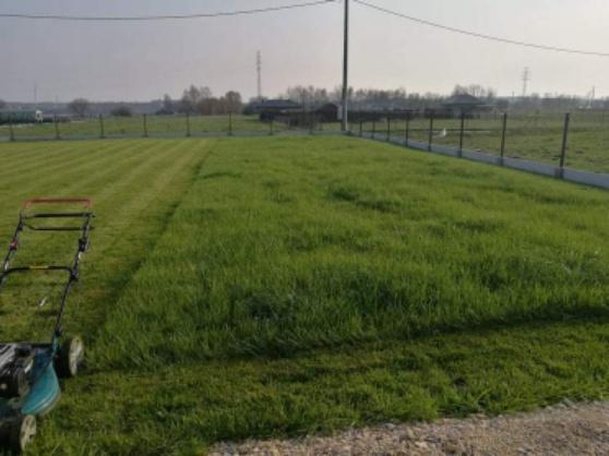 Trawnik w Niewieszu
